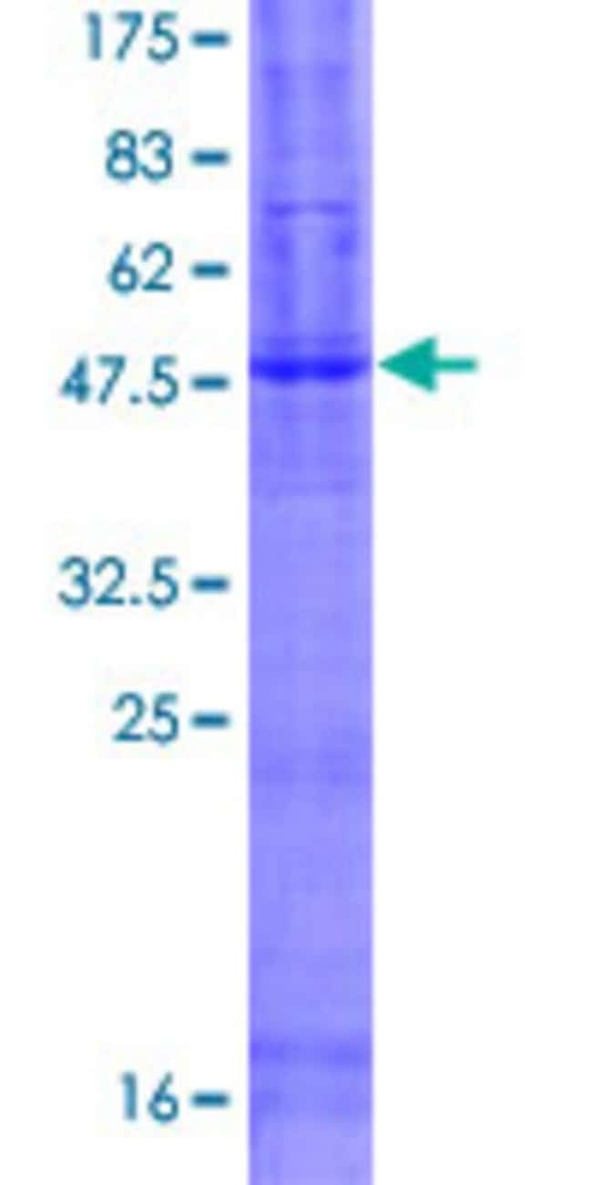 Abnova™Human C9orf127 Full-length ORF (AAH41377.1, 1 a.a. - 257 a.a.) Recombinant Protein with GST-tag at N-terminal 10μg Abnova™Human C9orf127 Full-length ORF (AAH41377.1, 1 a.a. - 257 a.a.) Recombinant Protein with GST-tag at N-terminal