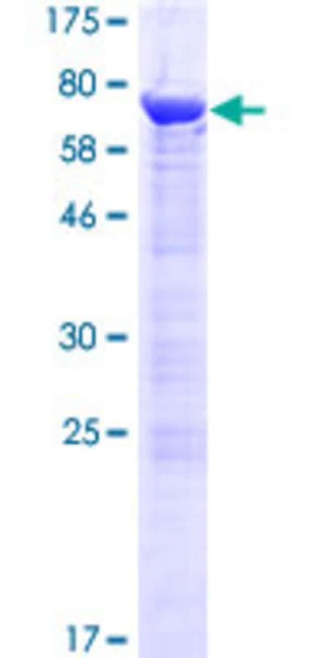 AbnovaHuman RNUXA Full-length ORF (NP_115553.2, 1 a.a. - 394 a.a.) Recombinant