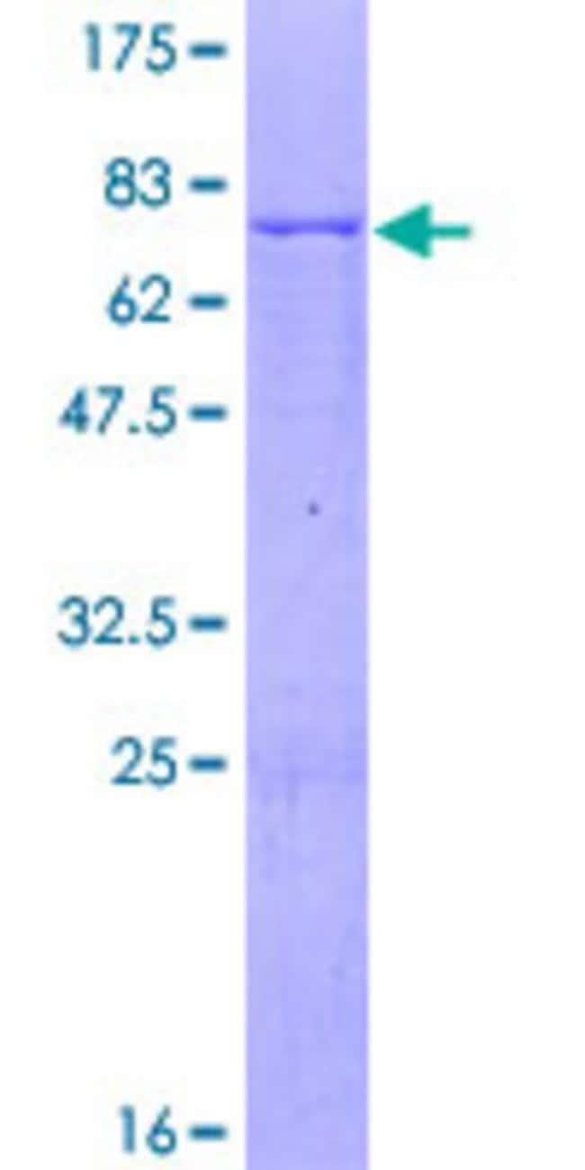 AbnovaHuman NUDT9 Full-length ORF (NP_076952.1, 1 a.a. - 350 a.a.) Recombinant