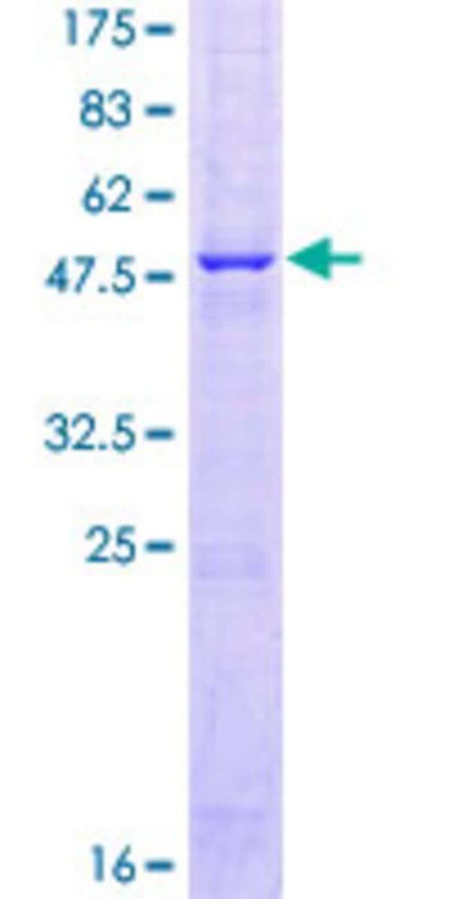 AbnovaHuman FAM3B Full-length ORF (AAH57829.1, 1 a.a. - 235 a.a.) Recombinant
