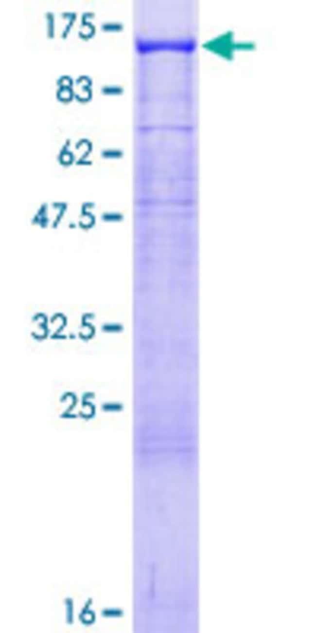 AbnovaHuman NLGN3 Full-length ORF (AAH51715.1, 1 a.a. - 828 a.a.) Recombinant
