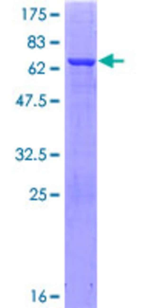 AbnovaHuman GFOD1 Full-length ORF (NP_061861.1, 1 a.a. - 390 a.a.) Recombinant