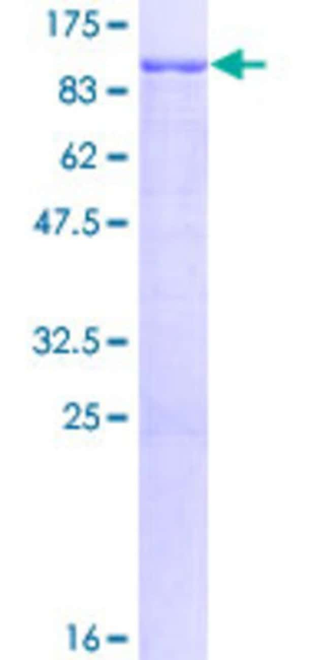AbnovaHuman PRMT7 Full-length ORF (NP_061896.1, 1 a.a. - 692 a.a.) Recombinant