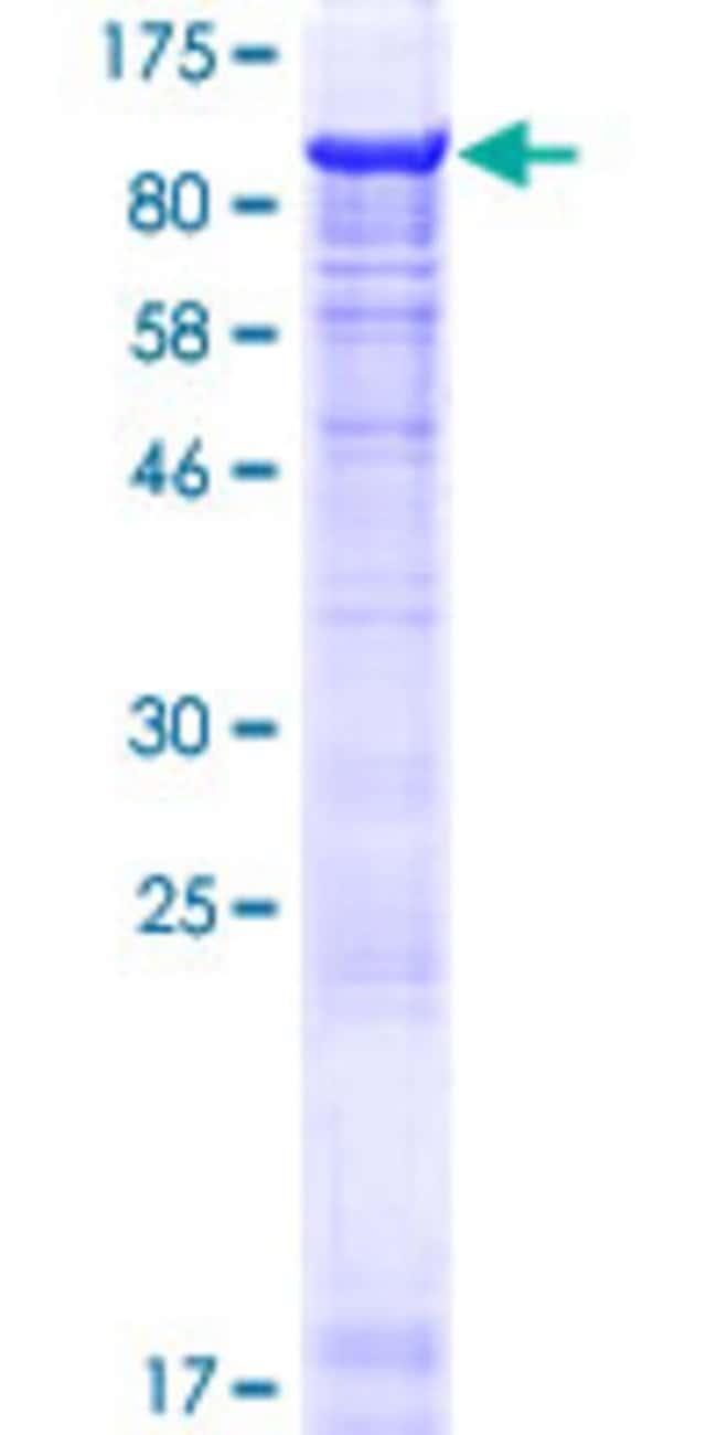 AbnovaHuman MIER2 Full-length ORF (NP_060020.1, 1 a.a. - 545 a.a.) Recombinant