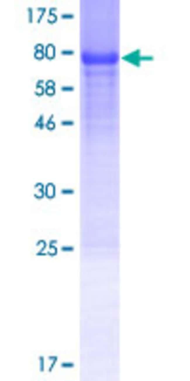 AbnovaHuman GDAP2 Full-length ORF (NP_060156.1, 1 a.a. - 497 a.a.) Recombinant