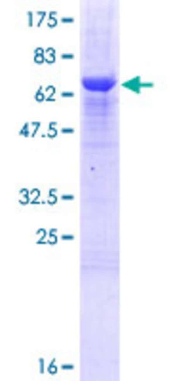 AbnovaHuman ZCCHC2 Full-length ORF (AAH06340.1, 1 a.a. - 362 a.a.) Recombinant
