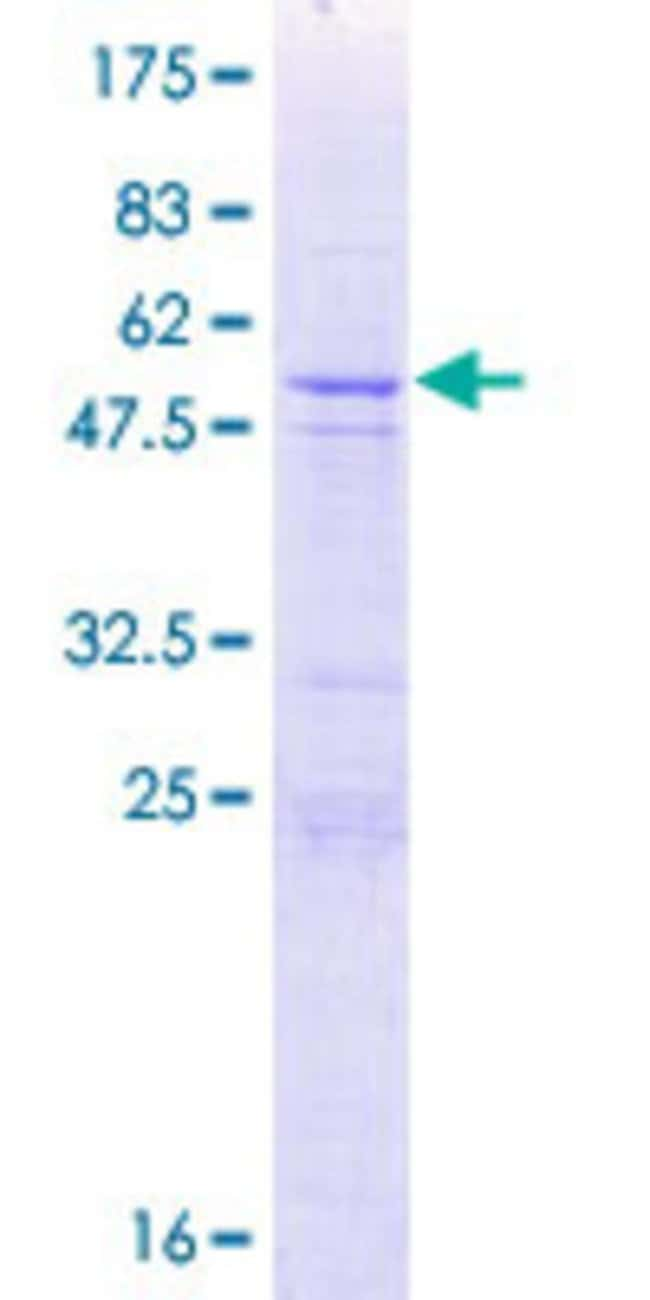 AbnovaHuman CXorf48 Full-length ORF (NP_001026875.1, 1 a.a. - 264 a.a.)