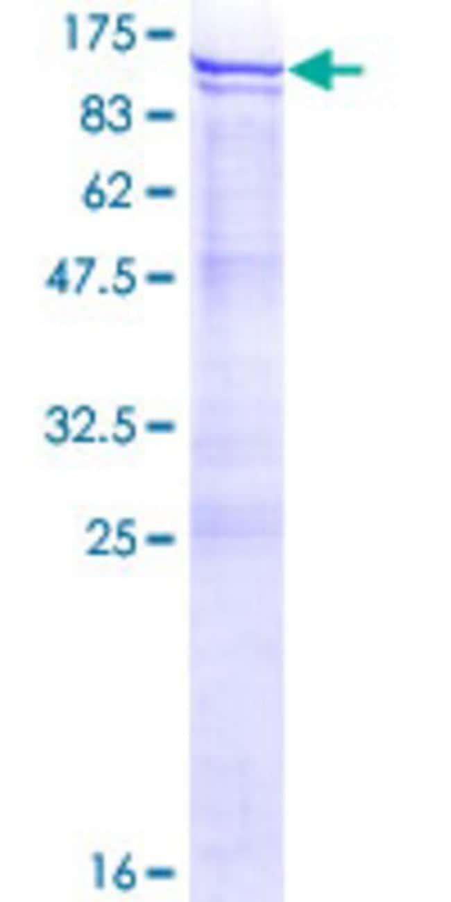 AbnovaHuman ANKZF1 Full-length ORF (NP_001035869.1, 1 a.a. - 726 a.a.)