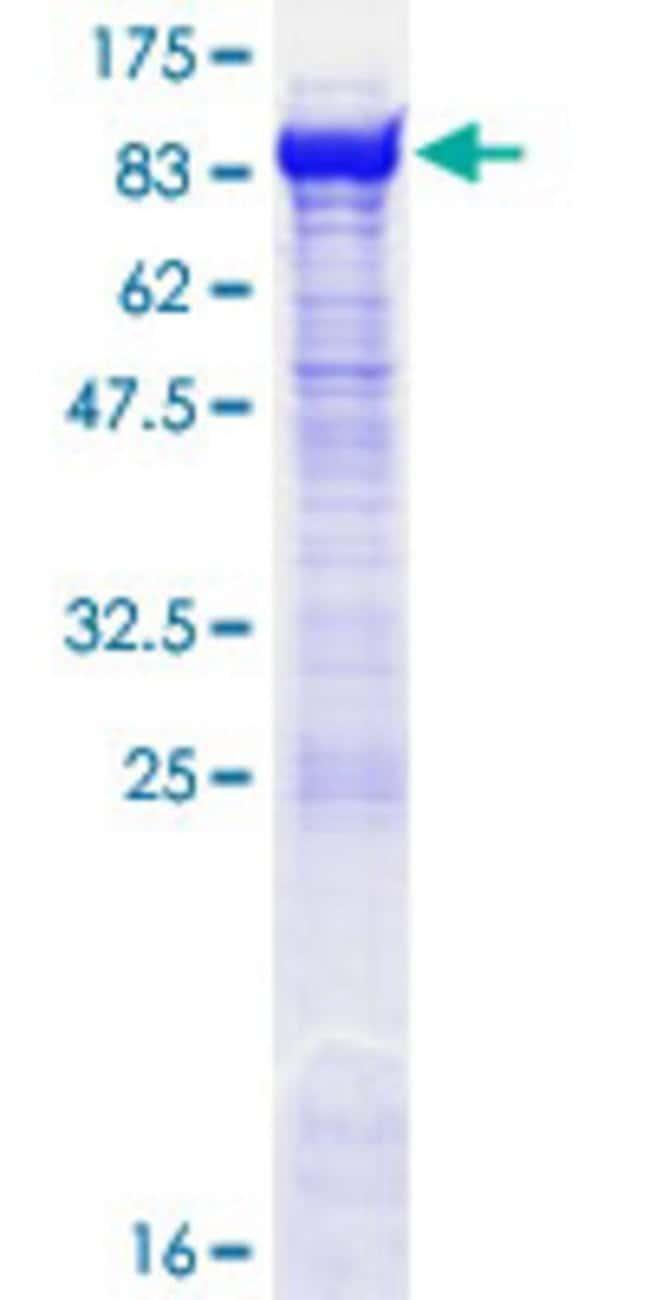 AbnovaHuman OGFOD1 Full-length ORF (NP_060703.3, 1 a.a. - 542 a.a.) Recombinant