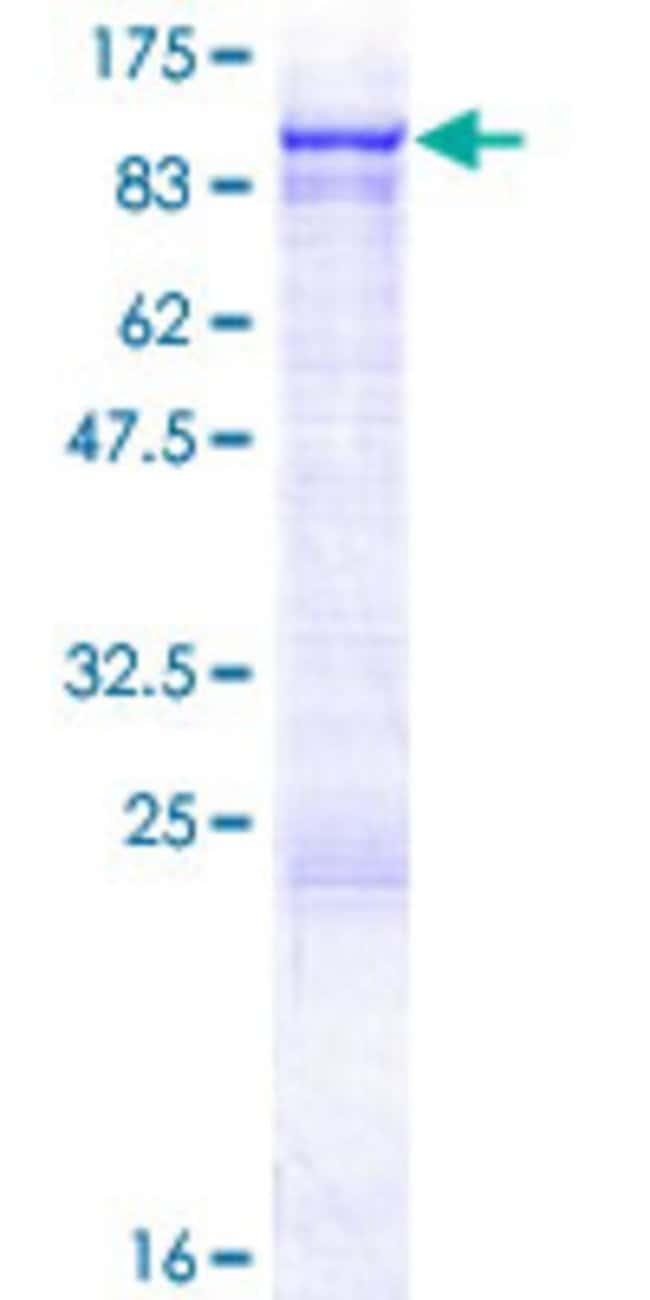 AbnovaHuman VPS53 Full-length ORF (NP_060759.2, 1 a.a. - 670 a.a.) Recombinant