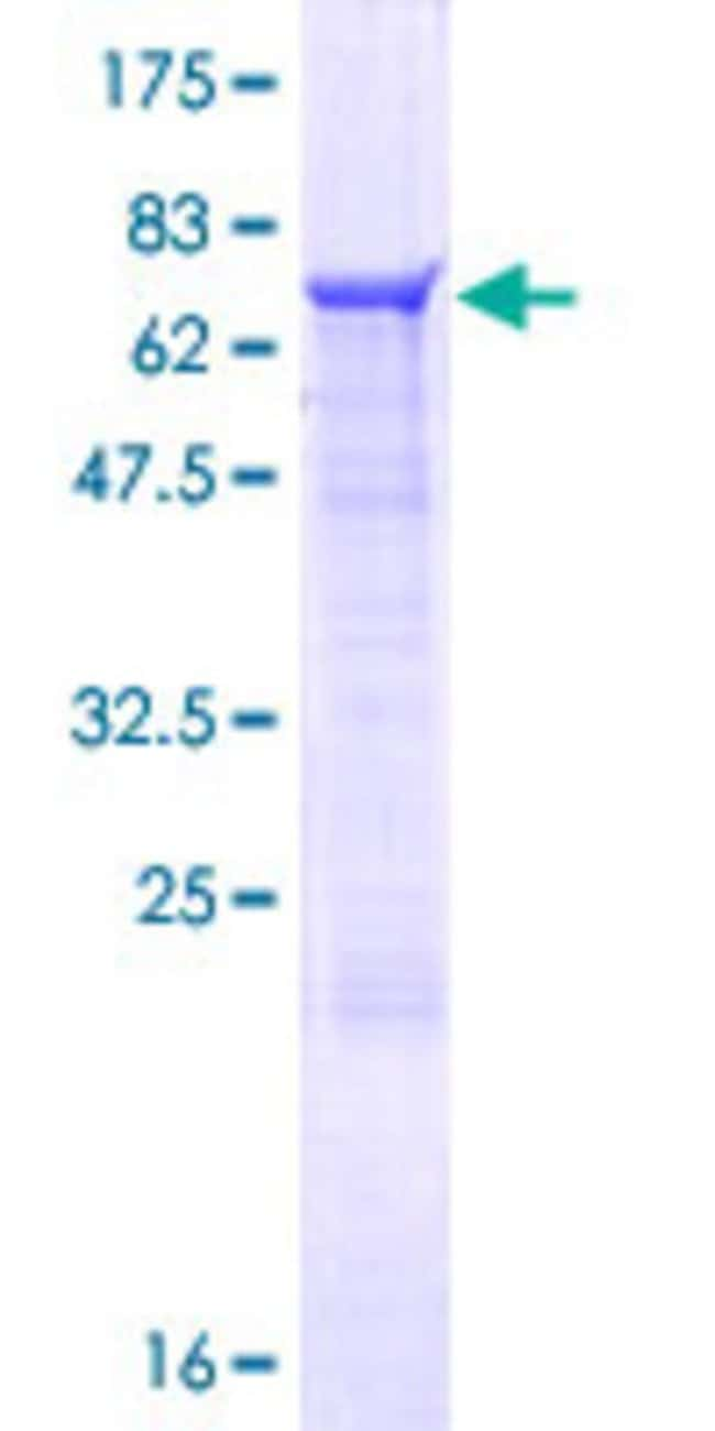 Abnova Human ZNF821 Full-length ORF (NP_060000.1, 1 a.a. - 370 a.a.) Recombinant