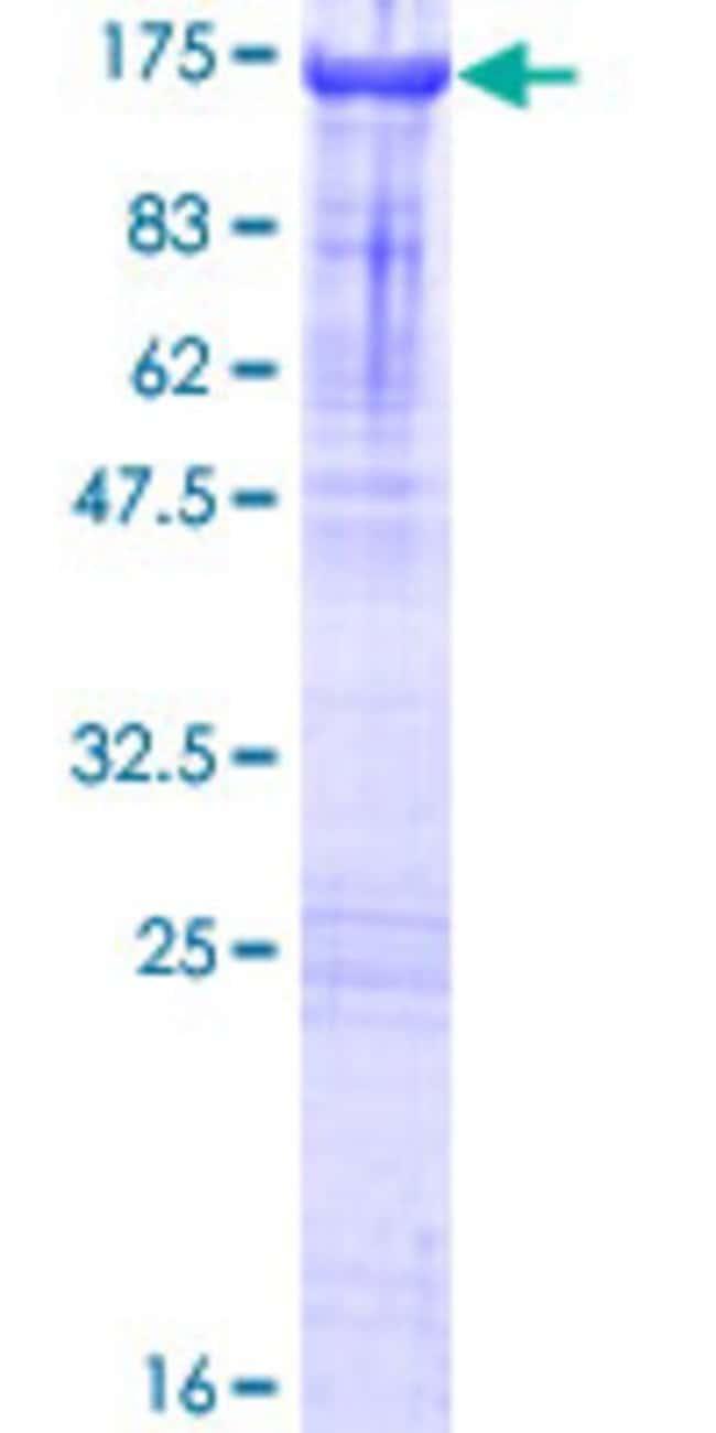 AbnovaHuman ZCCHC8 Full-length ORF (NP_060082.2, 1 a.a. - 707 a.a.) Recombinant