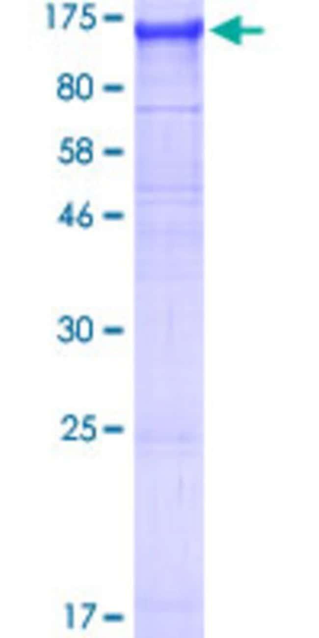 AbnovaHuman NLRP2 Full-length ORF (NP_060322.1, 1 a.a. - 1062 a.a.) Recombinant