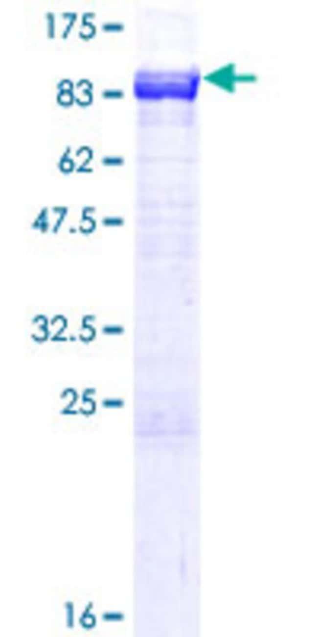 AbnovaHuman NPLOC4 Full-length ORF (AAH25930.1, 1 a.a. - 608 a.a.) Recombinant