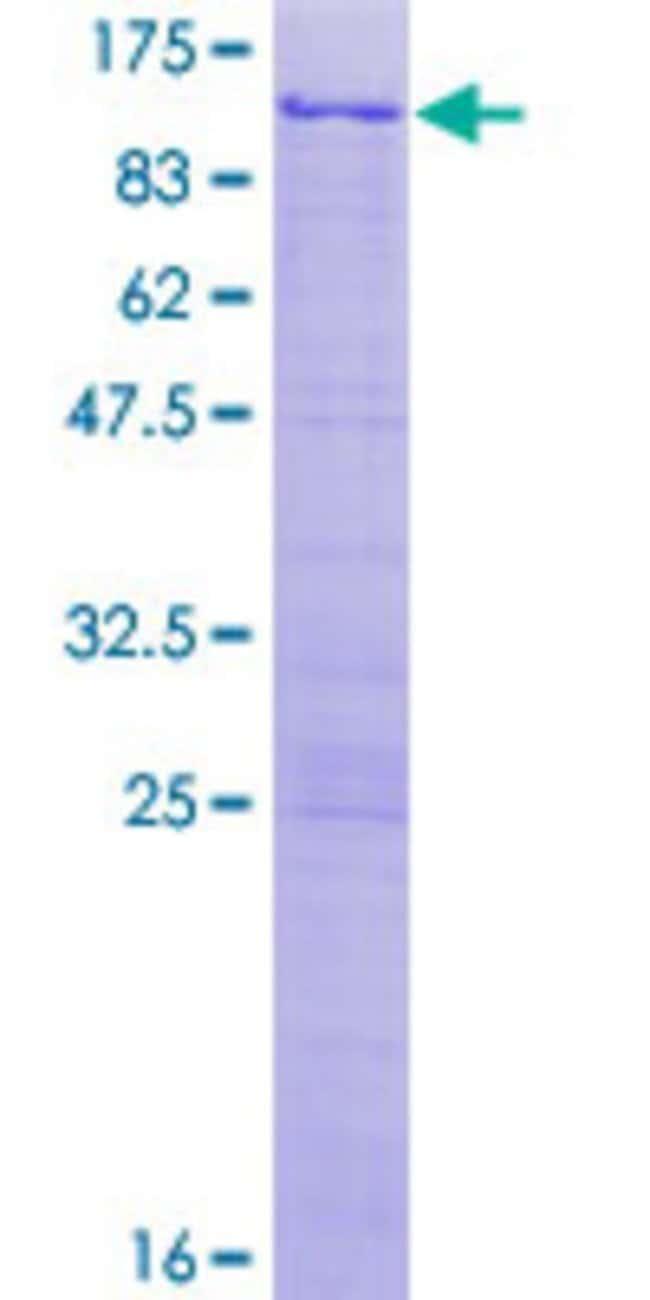 AbnovaHuman NKRF Full-length ORF (AAH68514.1, 1 a.a. - 690 a.a.) Recombinant