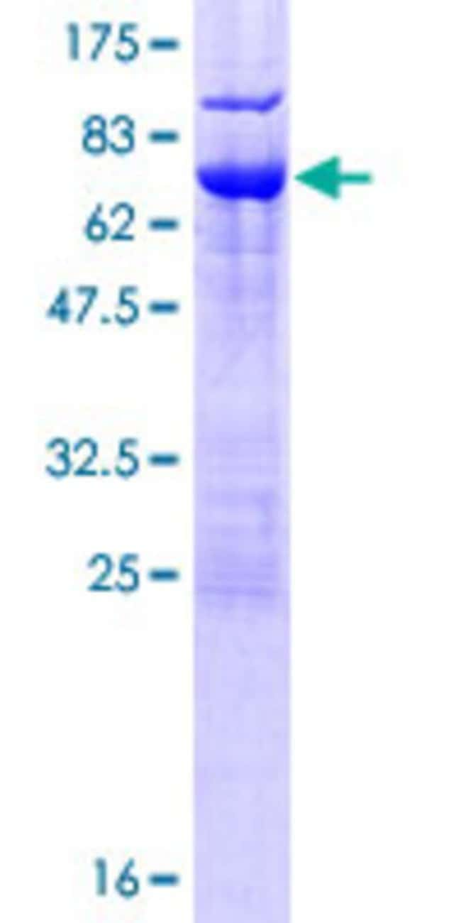 AbnovaHuman NSFL1C Full-length ORF (NP_057227.2, 1 a.a. - 370 a.a.) Recombinant