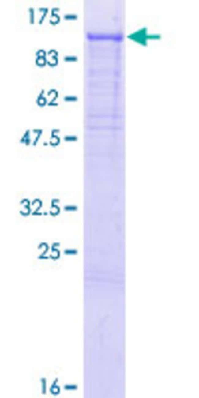 AbnovaHuman PCDHGC5 Full-length ORF (NP_115783.1, 1 a.a. - 878 a.a.) Recombinant