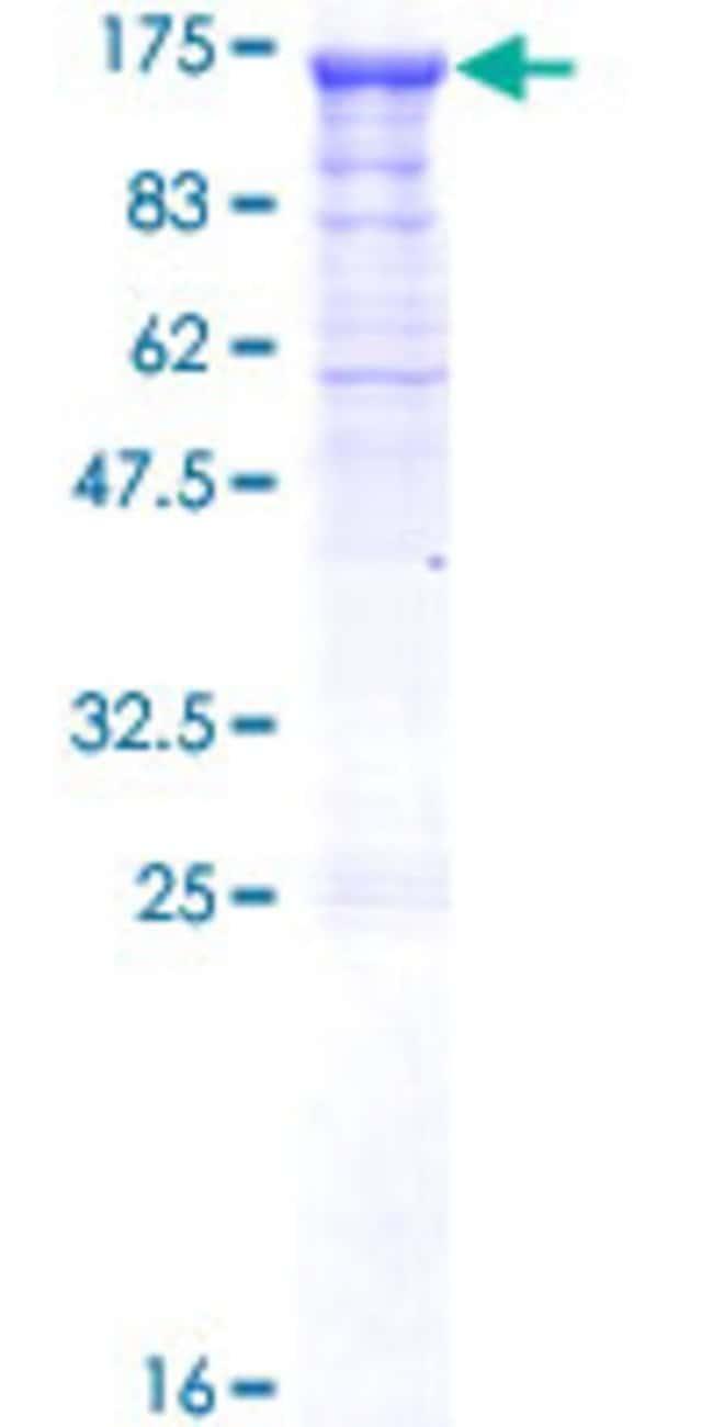 AbnovaHuman PCDHGC4 Full-length ORF (NP_115782.1, 1 a.a. - 871 a.a.) Recombinant