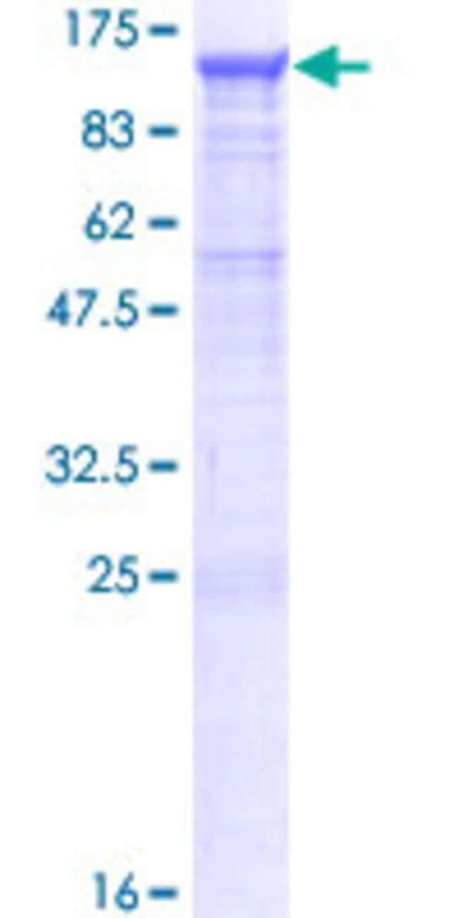 AbnovaHuman PCDHGB1 Full-length ORF (NP_115266.1, 1 a.a. - 810 a.a.) Recombinant