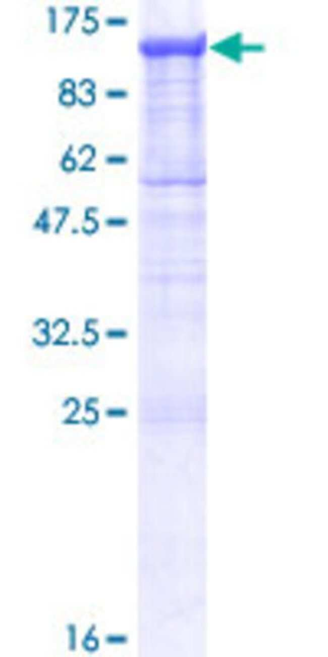 AbnovaHuman PCDHGA11 Full-length ORF (NP_114480.1, 1 a.a. - 837 a.a.) Recombinant