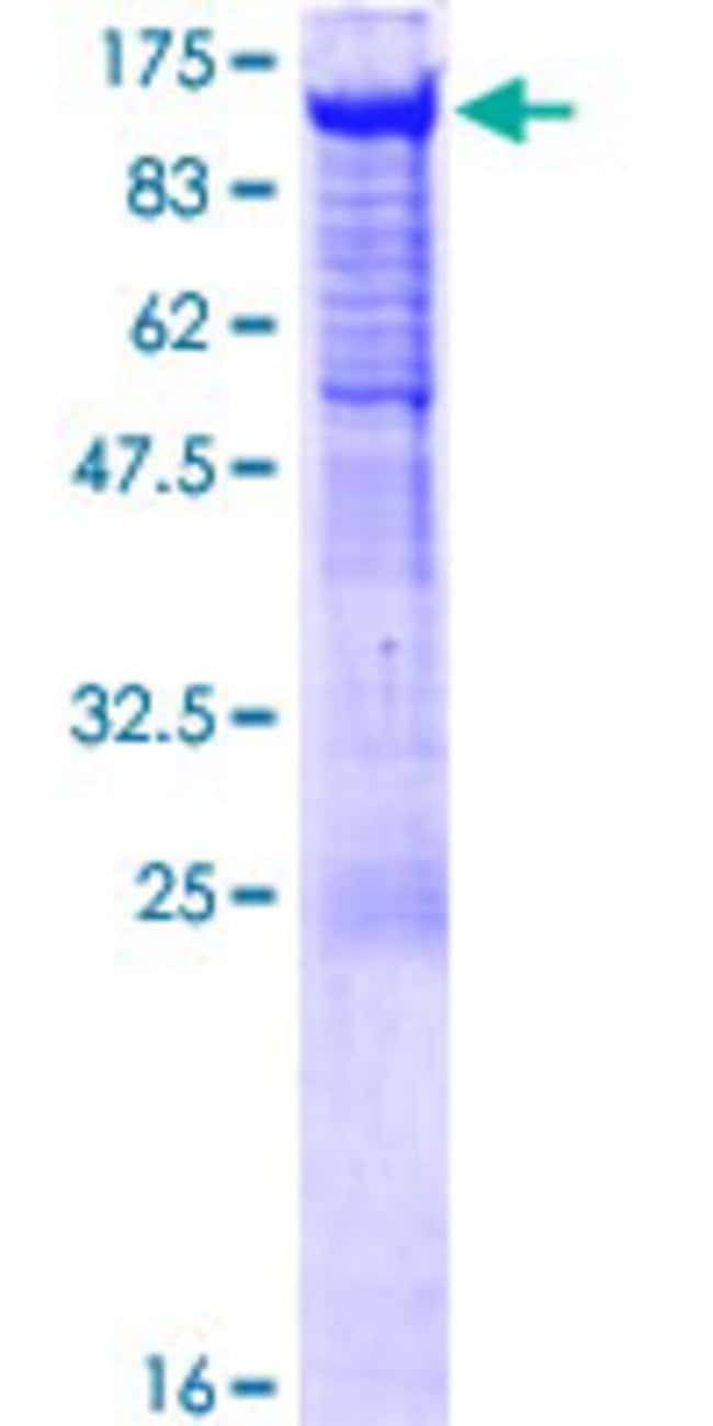 Abnova™Human PCDHGA5 Full-length ORF (NP_114443.1, 1 a.a. - 813 a.a.) Recombinant Protein with GST-tag at N-terminal 25μg Abnova™Human PCDHGA5 Full-length ORF (NP_114443.1, 1 a.a. - 813 a.a.) Recombinant Protein with GST-tag at N-terminal