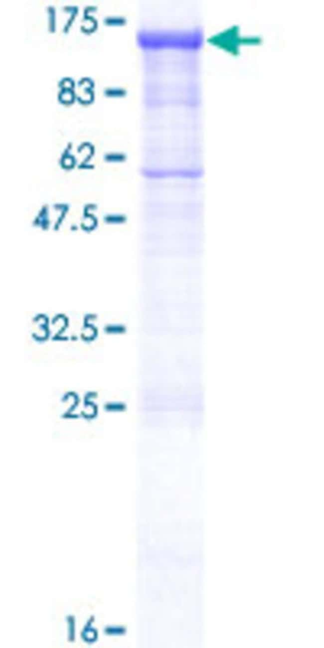 AbnovaHuman PCDHGA2 Full-length ORF (NP_114398.1, 1 a.a. - 823 a.a.) Recombinant