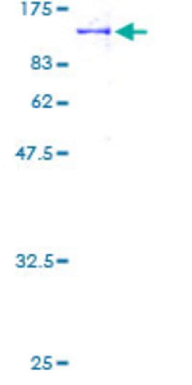AbnovaHuman PCDHB15 Full-length ORF (AAH38797, 1 a.a. - 787 a.a.) Recombinant