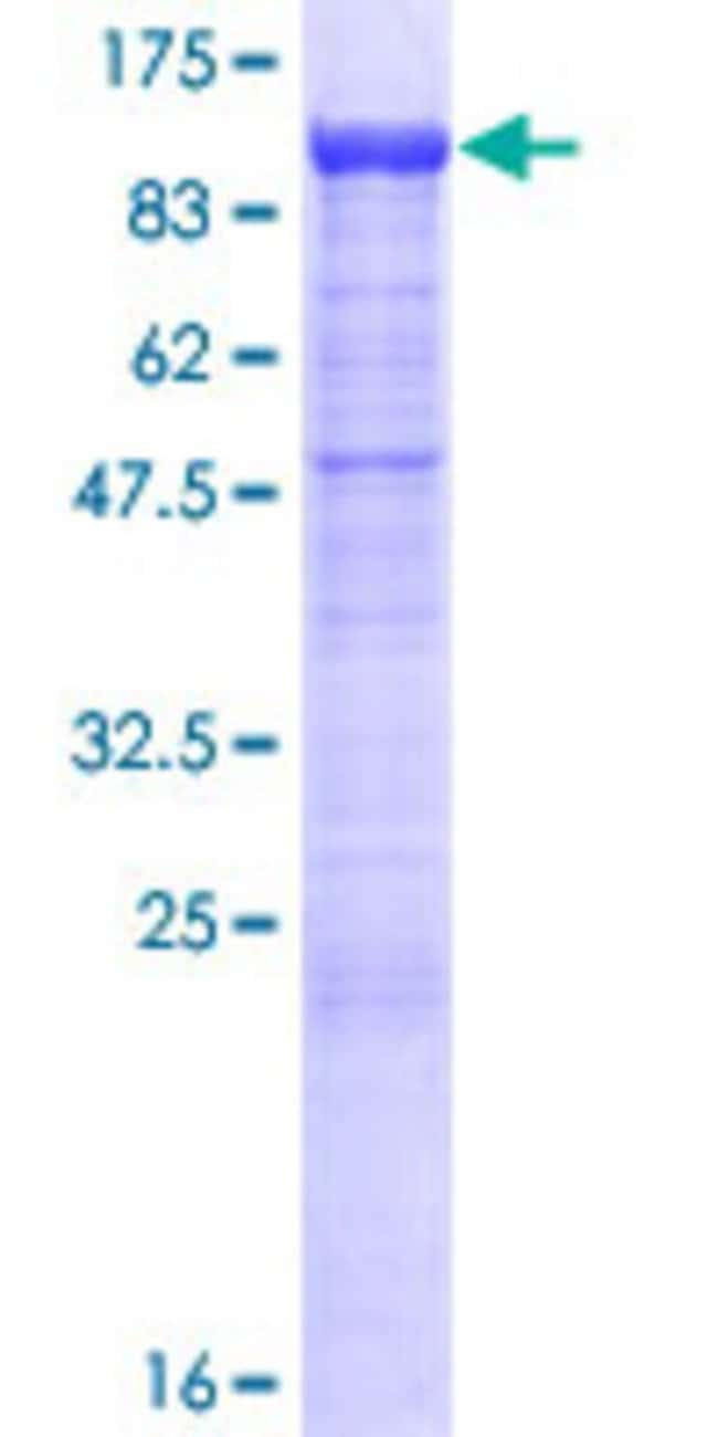 AbnovaHuman PCDHB13 Full-length ORF (NP_061756.1, 1 a.a. - 798 a.a.) Recombinant