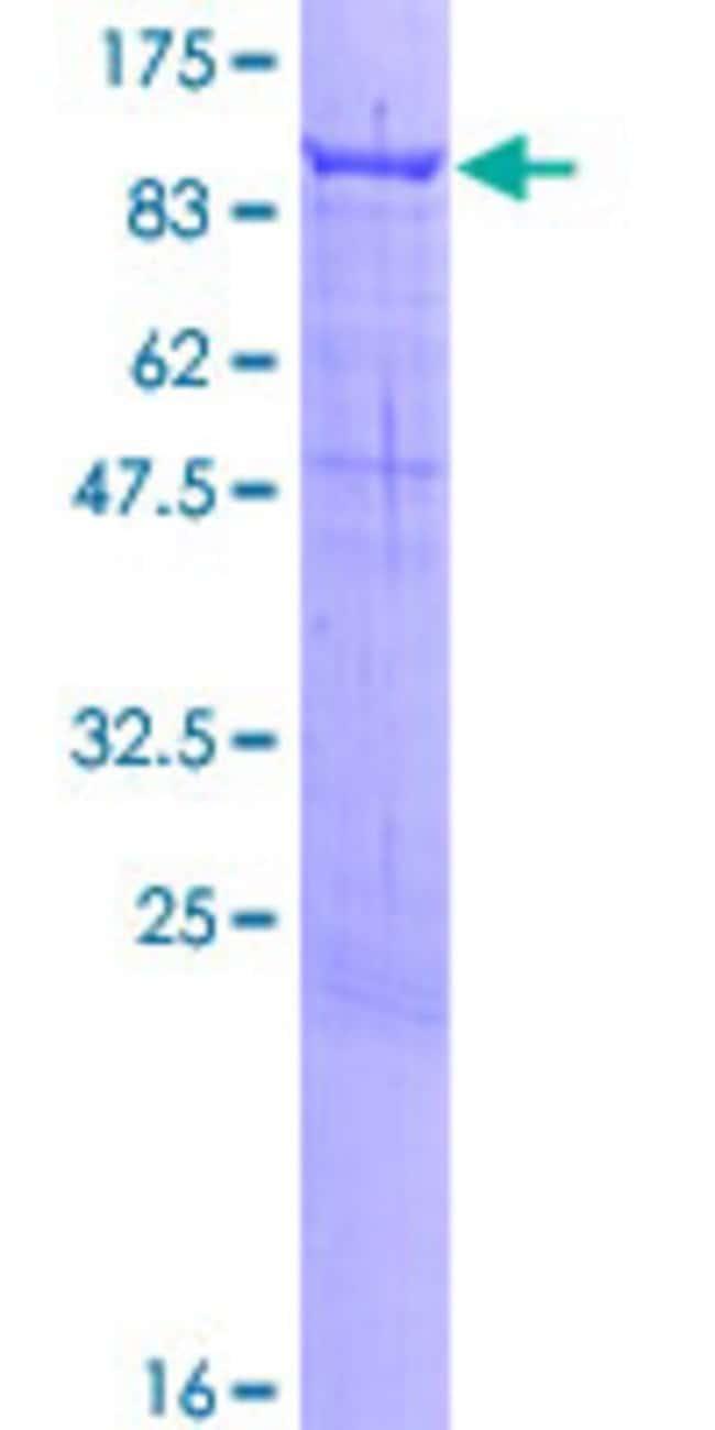 AbnovaHuman PCDHB12 Full-length ORF (NP_061755.1, 1 a.a. - 795 a.a.) Recombinant