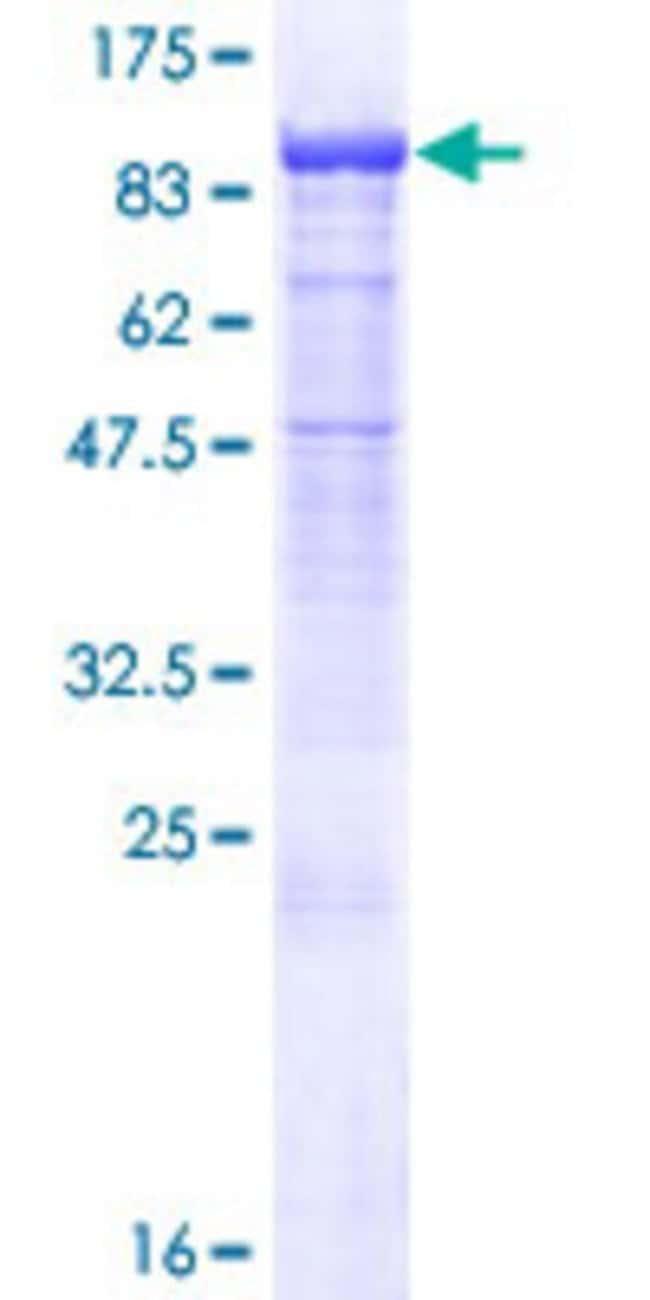 AbnovaHuman PCDHB7 Full-length ORF (AAH98574.1, 1 a.a. - 793 a.a.) Recombinant