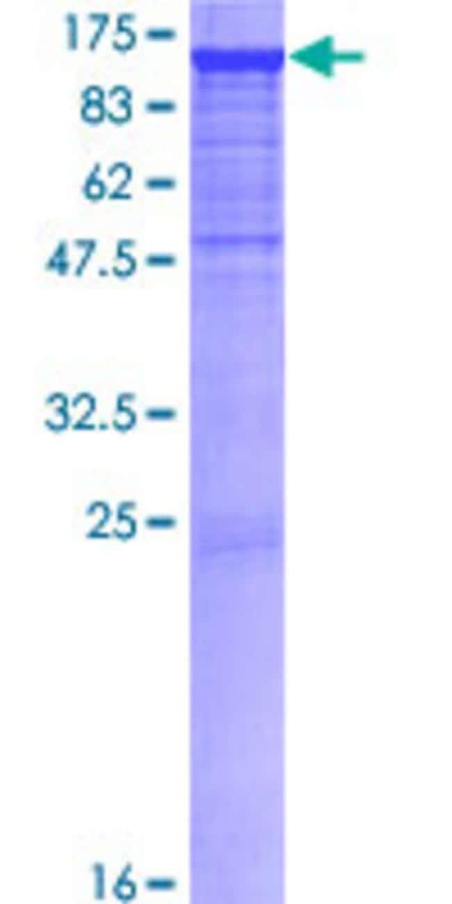 AbnovaHuman PCDHAC2 Full-length ORF (NP_114089.1, 1 a.a. - 884 a.a.) Recombinant