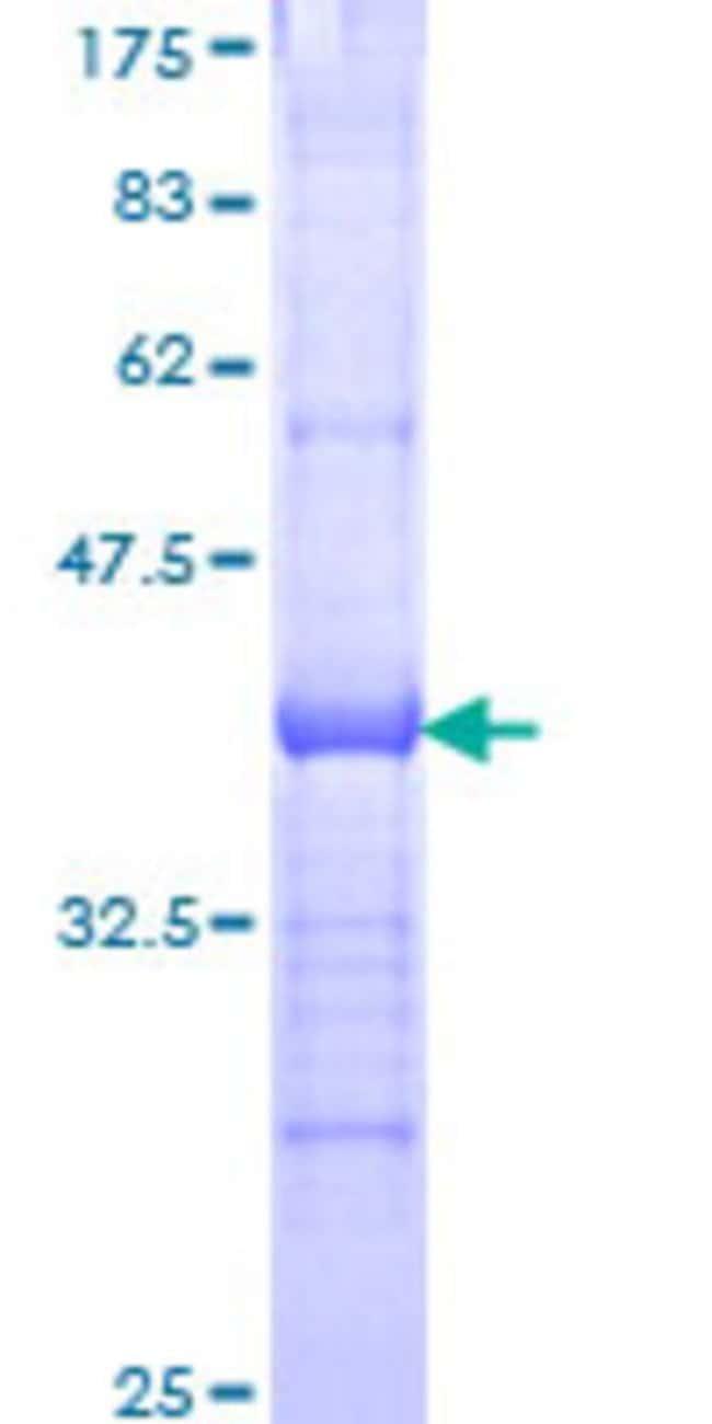 AbnovaHuman PCDHA12 Partial ORF (NP_061726, 222 a.a. - 327 a.a.) Recombinant