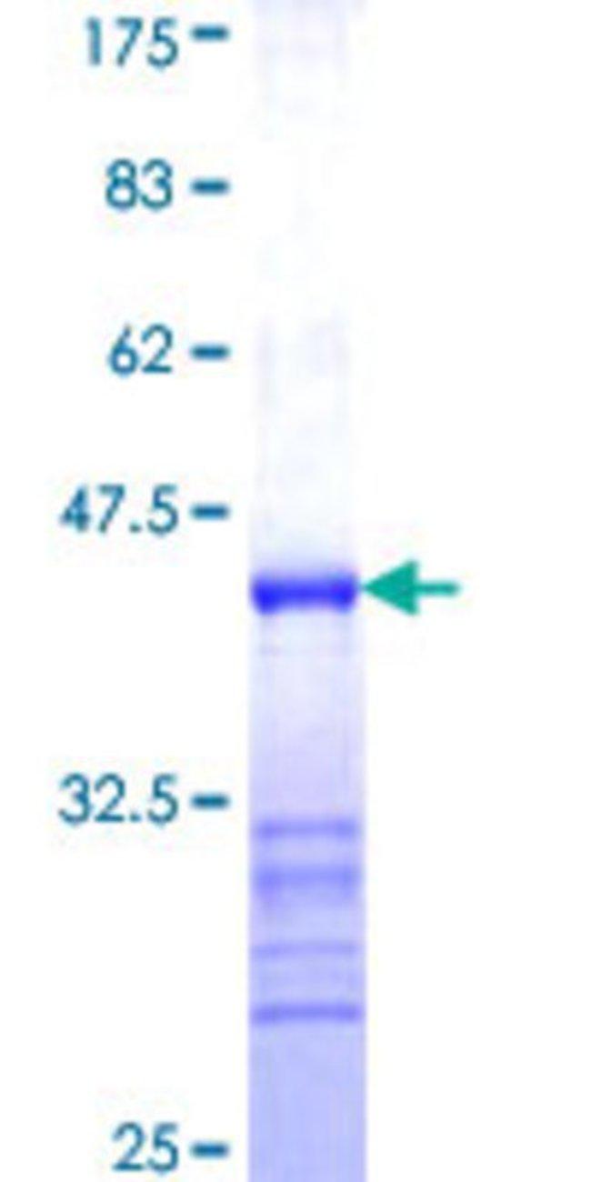 AbnovaHuman PCDHA3 Partial ORF (NP_061729, 180 a.a. - 287 a.a.) Recombinant