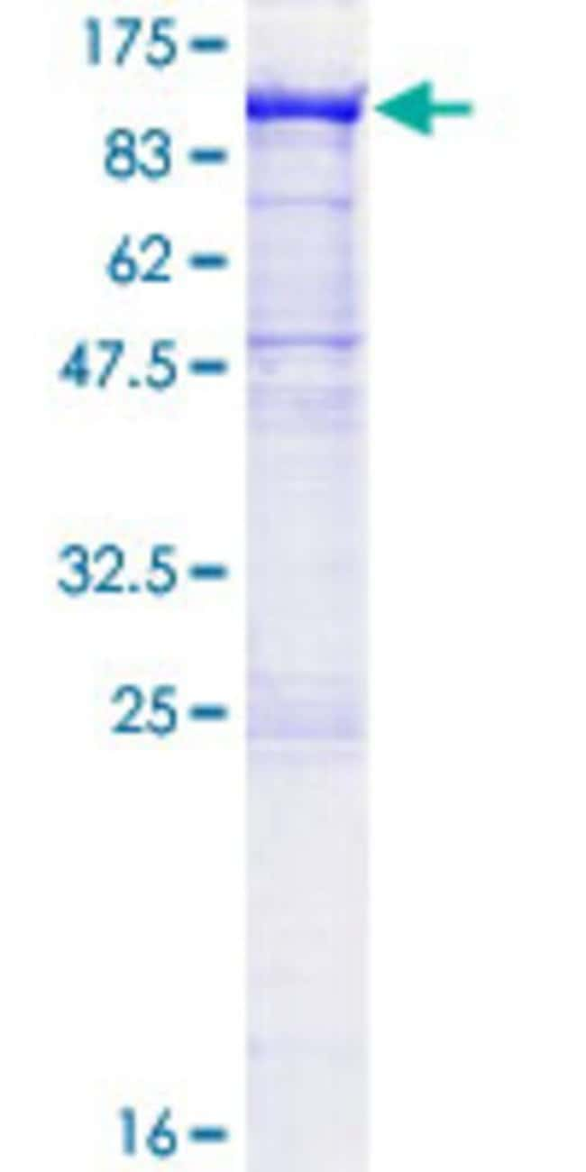 AbnovaHuman PCDHA2 Full-length ORF (AAH03126.1, 1 a.a. - 808 a.a.) Recombinant