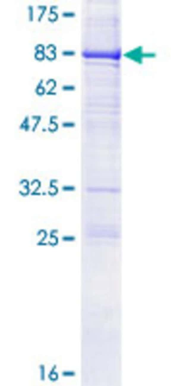 Abnova™Human CRTAM Full-length ORF (AAH70266.1, 1 a.a. - 393 a.a.) Recombinant Protein with GST-tag at N-terminal 10μg Abnova™Human CRTAM Full-length ORF (AAH70266.1, 1 a.a. - 393 a.a.) Recombinant Protein with GST-tag at N-terminal