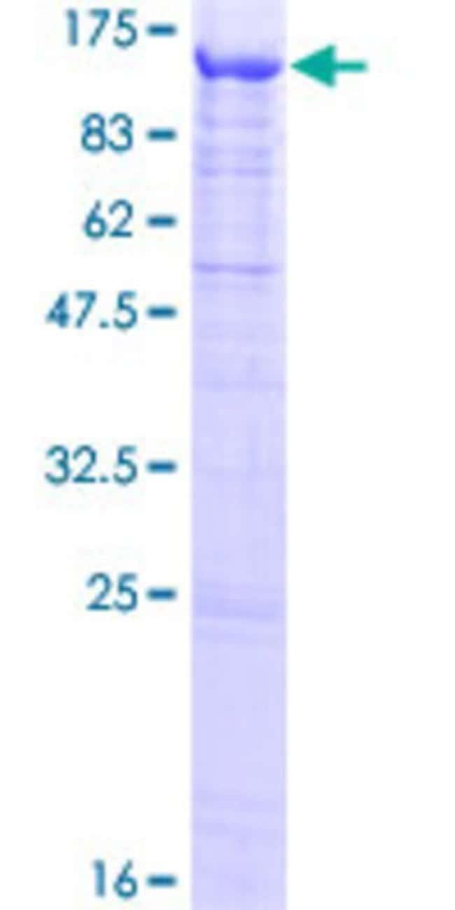 AbnovaHuman FSTL5 Full-length ORF (NP_064501.1, 1 a.a. - 847 a.a.) Recombinant