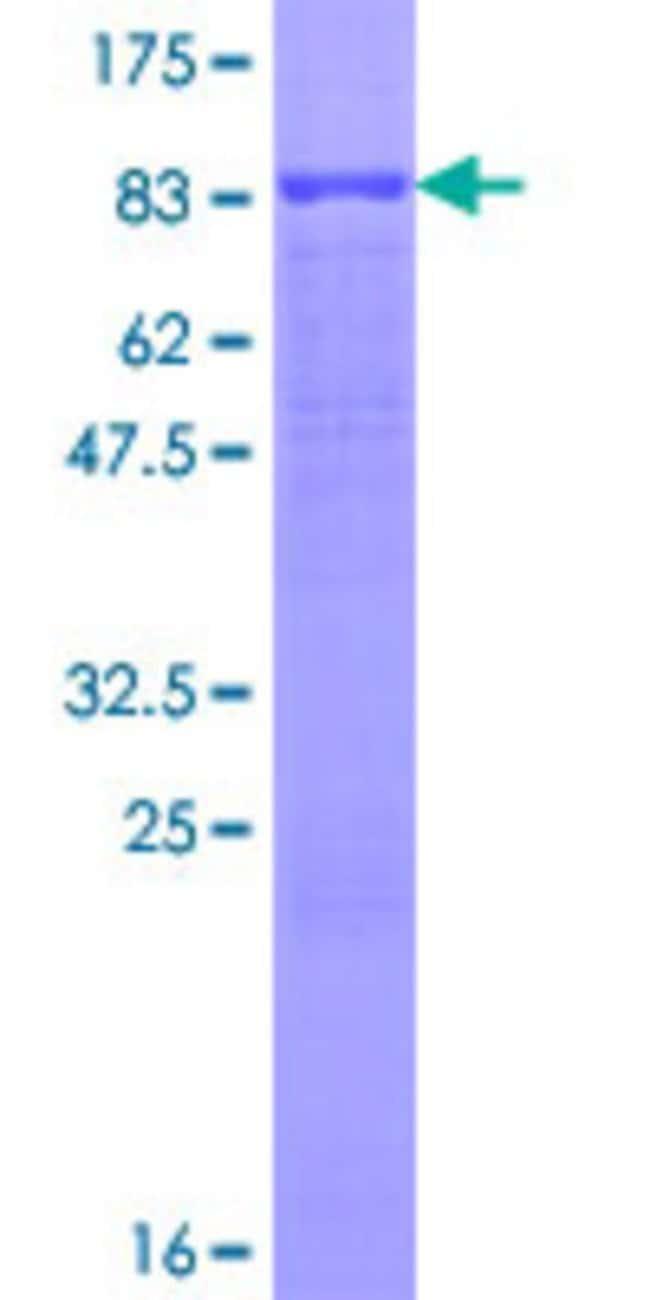 AbnovaHuman PLXDC1 Full-length ORF (AAH36059.1, 1 a.a. - 500 a.a.) Recombinant