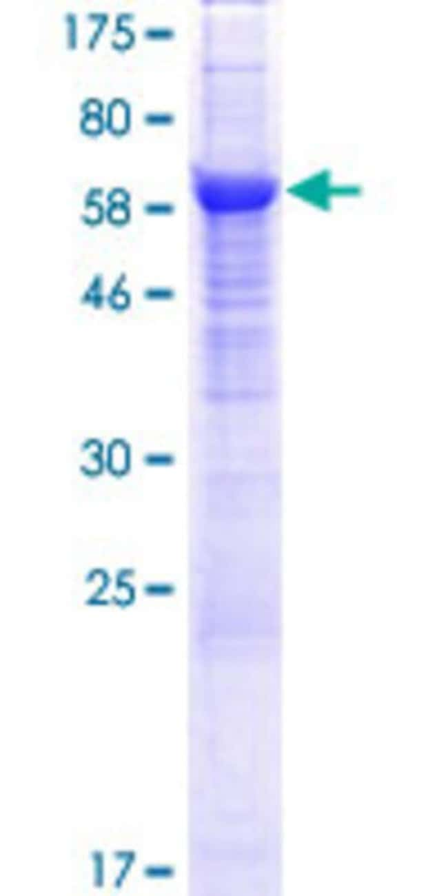 AbnovaHuman C20orf3 Full-length ORF (NP_065392.1, 1 a.a. - 416 a.a.) Recombinant