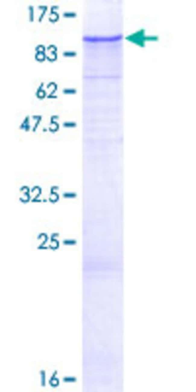 AbnovaHuman ZNF287 Full-length ORF (NP_065704.1, 1 a.a. - 754 a.a.) Recombinant
