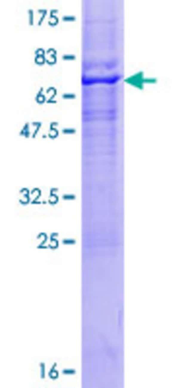 AbnovaHuman RNF150 Full-length ORF (AAI01993.1, 1 a.a. - 314 a.a.) Recombinant