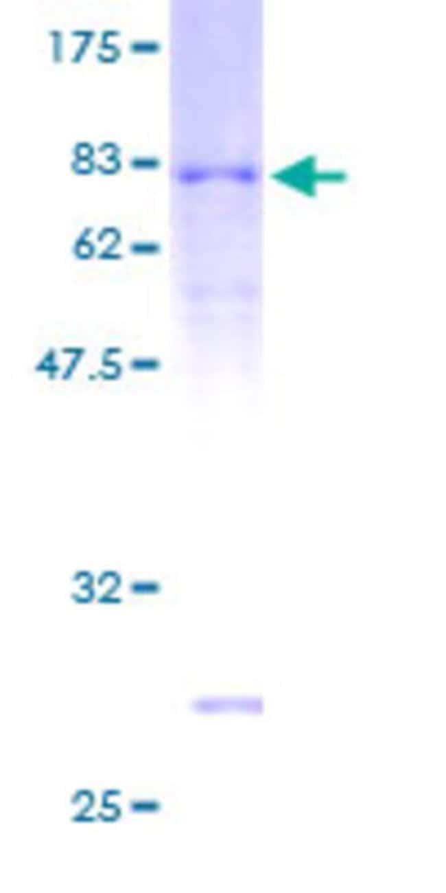 AbnovaHuman ARRDC3 Full-length ORF (AAH15928, 1 a.a. - 414 a.a.) Recombinant