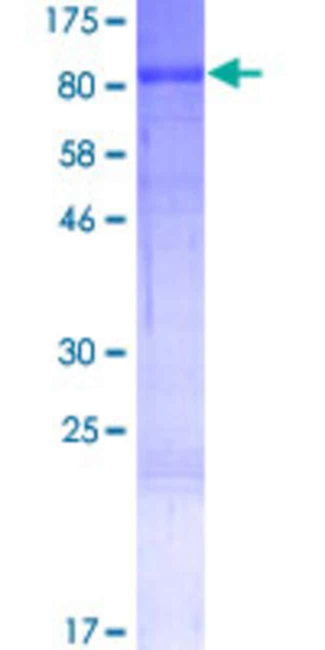 Abnova Human RANBP10 Full-length ORF (NP_065901.1, 1 a.a. - 620 a.a.) Recombinant