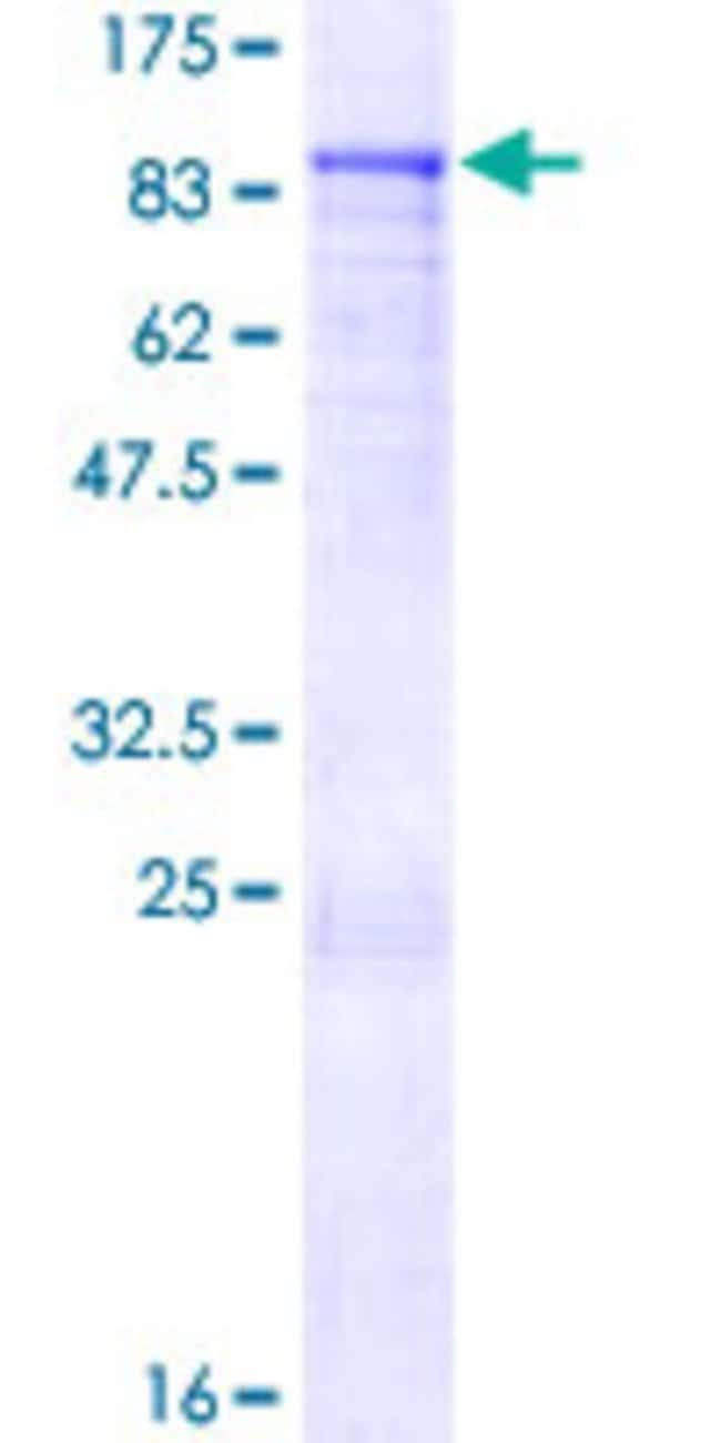 Abnova™Human ZNF317 Full-length ORF (AAH78154.1, 1 a.a. - 595 a.a.) Recombinant Protein with GST-tag at N-terminal 10μg Abnova™Human ZNF317 Full-length ORF (AAH78154.1, 1 a.a. - 595 a.a.) Recombinant Protein with GST-tag at N-terminal