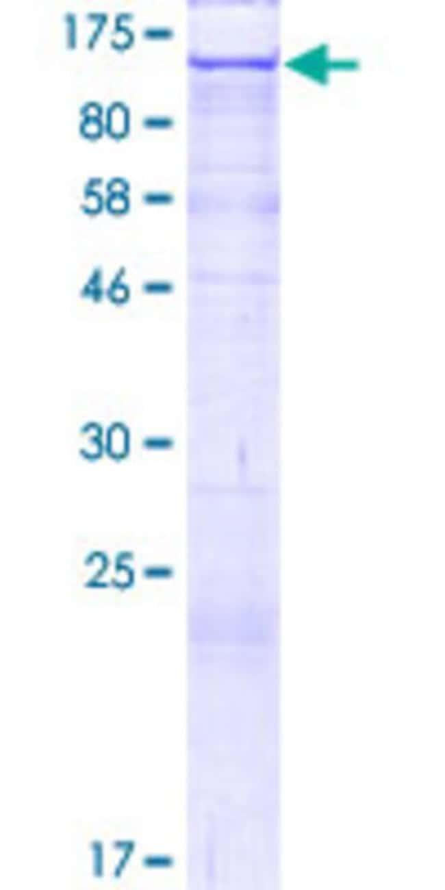 AbnovaHuman CLSTN2 Full-length ORF (AAI04486.1, 1 a.a. - 955 a.a.) Recombinant