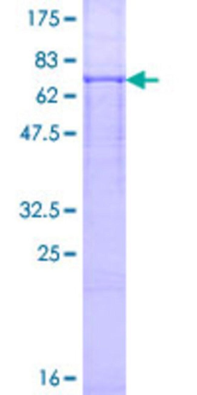 AbnovaHuman LMBR1 Full-length ORF (NP_071903.2, 1 a.a. - 490 a.a.) Recombinant