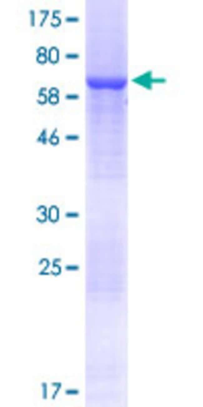 AbnovaHuman AZI2 Full-length ORF (NP_071906.1, 1 a.a. - 392 a.a.) Recombinant