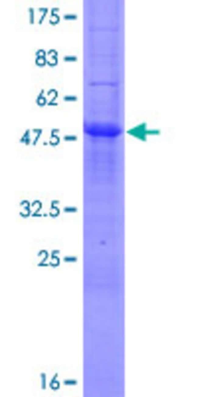 AbnovaHuman MOSPD3 Full-length ORF (NP_076438.1, 1 a.a. - 235 a.a.) Recombinant