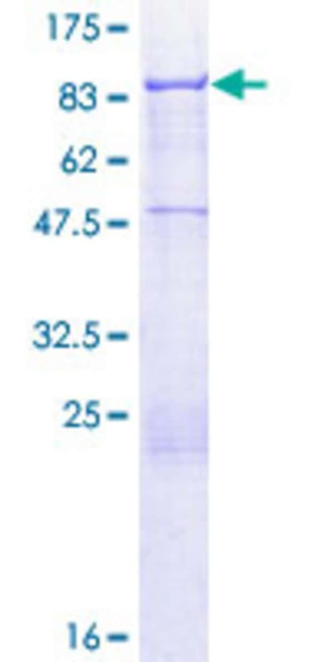 AbnovaHuman ACBD3 Full-length ORF (AAH60792.1, 1 a.a. - 528 a.a.) Recombinant
