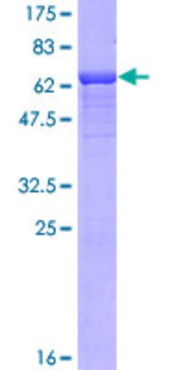 AbnovaHuman NDRG4 Full-length ORF (AAH11795.1, 1 a.a. - 339 a.a.) Recombinant