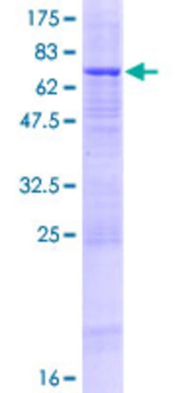 AbnovaHuman PCYOX1L Full-length ORF (AAH00014.1, 1 a.a. - 418 a.a.) Recombinant